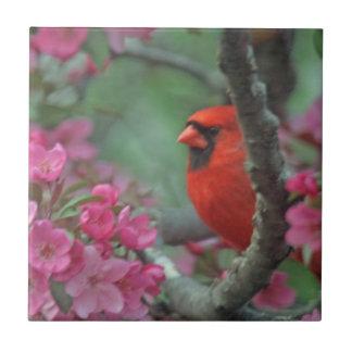 Cardenal de la primavera azulejo