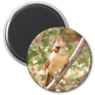 Cardenal de sexo femenino en rama imán redondo 5 cm