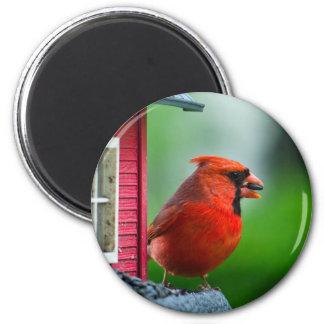 cardenal de sexo masculino en el alimentador en la imanes de nevera