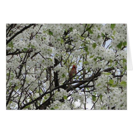 Cardenal entre los flores blancos tarjeta de felicitación