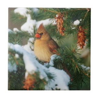 Cardenal septentrional en el árbol, Illinois Azulejo