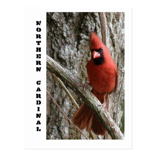 Cardenal septentrional postal