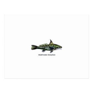 Carita septentrional - Roundhead - pescadillas Postal