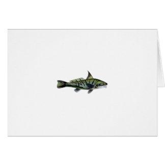 Carita septentrional - Roundhead - pescadillas Tarjeta De Felicitación