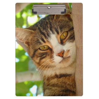 Carpeta De Pinza Árbol bonito del gato del gatito