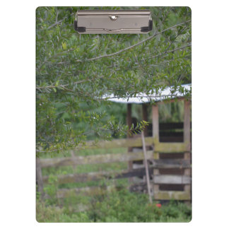 Carpeta De Pinza árbol y foto vieja de la Florida del granero