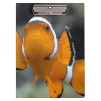 Carpeta De Pinza clownfish que hacen frente al frente