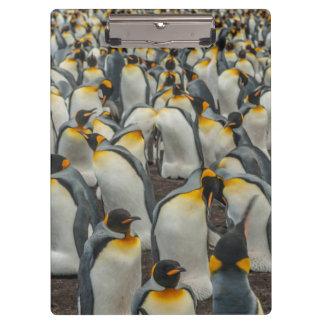 Carpeta De Pinza Colonia del pingüino de rey, Malvinas