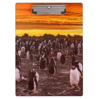 Carpeta De Pinza Colonia en la puesta del sol, Malvinas del