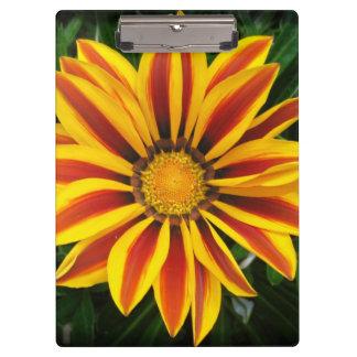 Carpeta De Pinza Foto anaranjada hermosa de la flor de Sun