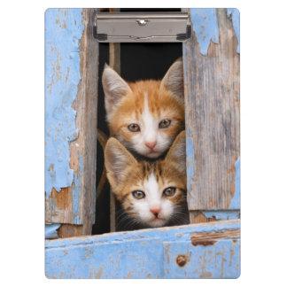 Carpeta De Pinza Gatitos lindos del gato en una foto azul de la