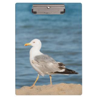 Carpeta De Pinza Gaviota que camina en la playa