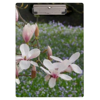 Carpeta De Pinza Magnolia rosada floreciente (Tulpenbaum) 03