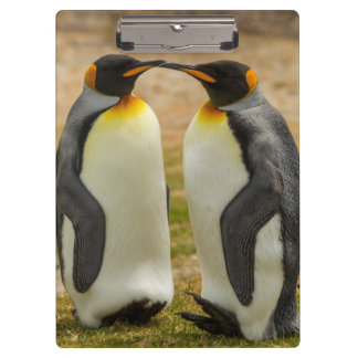 Carpeta De Pinza Pares de rey pingüinos, Malvinas