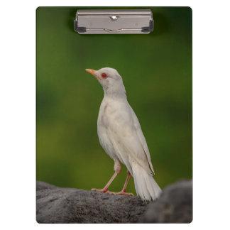 Carpeta De Pinza Petirrojo del albino en punto de la corona