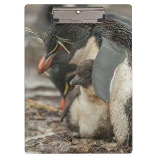 Carpeta De Pinza Pingüino y polluelo de Rockhopper