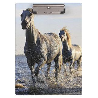 Carpeta De Pinza Tablero de la foto del caballo de Baeutiful