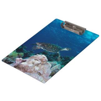 Carpeta De Pinza Tablero de la tortuga de mar