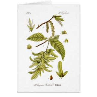 Carpinus Betulus (hornbeam europeo) Tarjeta De Felicitación