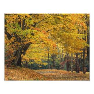 Carril sobresaliente del país del árbol de arce de cojinete
