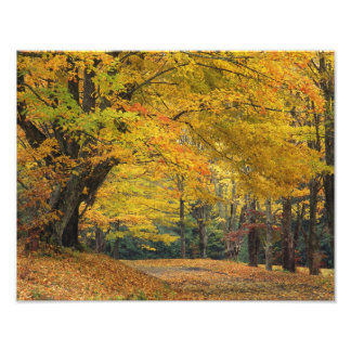 Carril sobresaliente del país del árbol de arce de fotografía
