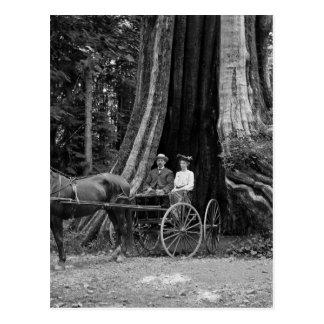 Carro en el árbol de hueco postal