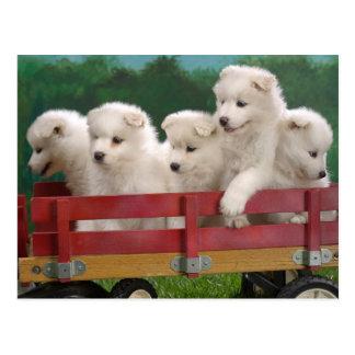 Carro por completo de perritos lindos postal