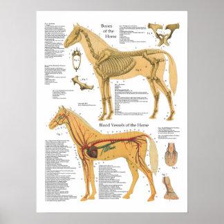 Carta arterial esquelética del veterinario de la póster