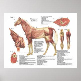 Carta de la anatomía del hombro del cuello del póster