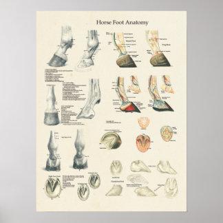 Carta del herrador de la anatomía de la pierna del póster