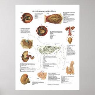 Carta del veterinario de la anatomía de los póster