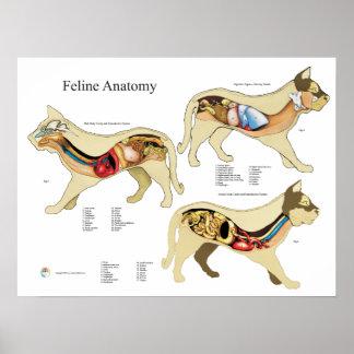 Carta del veterinario de la anatomía del órgano póster