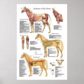 Carta esquelética del veterinario de la anatomía póster