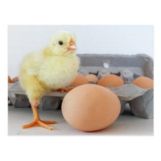 Cartón del polluelo y del huevo con el huevo de postal