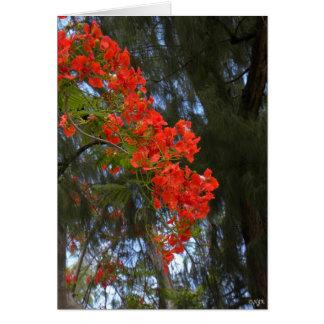 Cascada del árbol de llama tarjeta pequeña