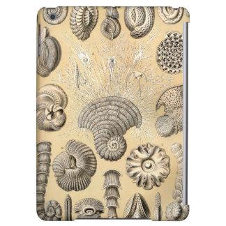 Cáscaras de Ernst Haeckel Thalamophora