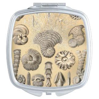 Cáscaras de Ernst Haeckel Thalamophora Espejos De Maquillaje