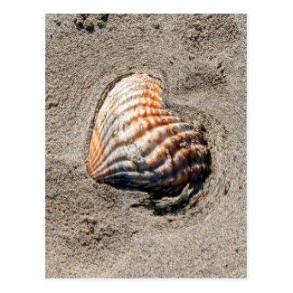 cáscaras del corazón en la playa postal