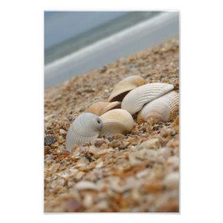 Cáscaras del mar en imágenes imaginativas de la foto