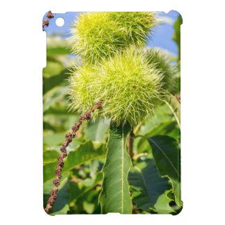 Cáscaras del verde y hojas del árbol de castaña
