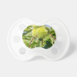 Cáscaras del verde y hojas del árbol de castaña chupetes para bebés