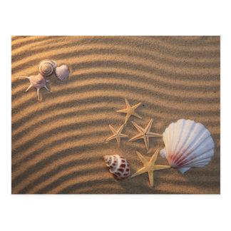 Cáscaras y estrellas de mar del mar postal
