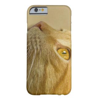 Caso con un gato rojo funda para iPhone 6 barely there