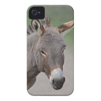 Caso del iPhone 4 del retrato del burro Funda Para iPhone 4