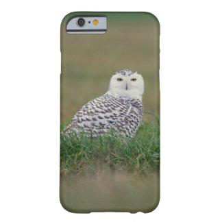 caso del iPhone 6 - búho Nevado en la hierba Funda Para iPhone 6 Barely There