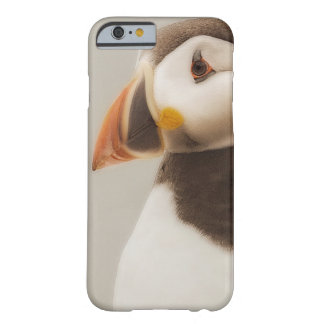 Caso del iPhone del frailecillo Funda Barely There iPhone 6