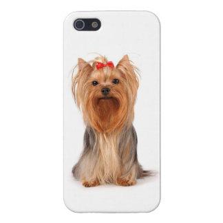 caso del perro de perrito de Yorkshire Terrier del iPhone 5 Fundas