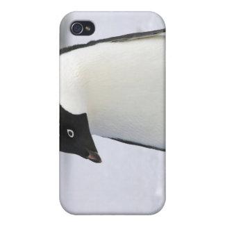 Caso solo del iPhone 4 del pingüino iPhone 4/4S Funda