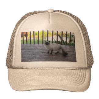 casquillo con una imagen del gato gorro de camionero