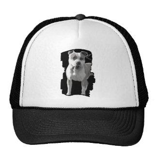 casquillo del pitbull gorra